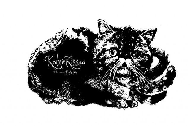 kolme kissaa / コルメキッサ